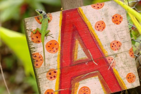 20151105-34-barbados_anole-Andromeda_Botanical_Garden-Barbados
